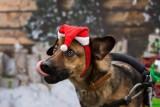 Wyjątkowy pies Simek czeka na nowy dom. Zobaczcie, a zakochacie się w nim!