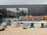 Afrykarium we wrocławskim zoo. Budowa dobiega końca (ZDJĘCIA)