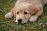Chcesz zrozumieć swojego psa? A może kupić rasowego? A Przyjdź na spotkanie w Wałbrzychu!