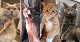 Światowy Dzień Kota 2021. Dziś swoje święto mają piękne i drapieżne koty zielonogórzan. Rozpoznajecie swojego pupila?