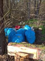 Lasy toną w śmieciach, a problemem nie są wyłącznie dzikie, nielegalne wysypiska