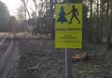 Wycinka drzew w Wągrowcu. Nadleśnictwo Durowo zapowiedziało prace na terenie chętnie odwiedzanym przez mieszkanców