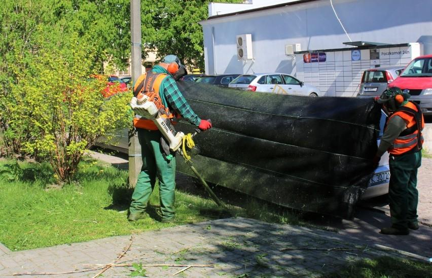 W Kielcach rozpoczęło się pierwsze koszenie traw [ZDJĘCIA]