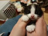 Słodkie kociaki z wałbrzyskiego schroniska. Zobacz, może któregoś przygarniesz!