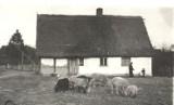 Zapomniana osada niedaleko Ustki. Poznajcie legendę wsi Zalesin [ZDJĘCIA]