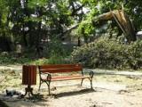 Park Staromiejski Żory: Trwa porządkowanie parku [ZDJĘCIA]