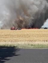Gmina Skoki. Pożar zboża na pniu. Spłonęło nawet do 10 hektarów!