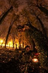 Dwa najstarsze żorskie cmentarze zachwycają nocą - zobacz zdjęcia!