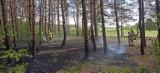 Pożar lasu pod Komarowem. Strażacy z Lubczyny w akcji