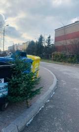 Akcja choinka w Mysłowicach. ZOMM zbierze drzewka świąteczne od mieszkańców
