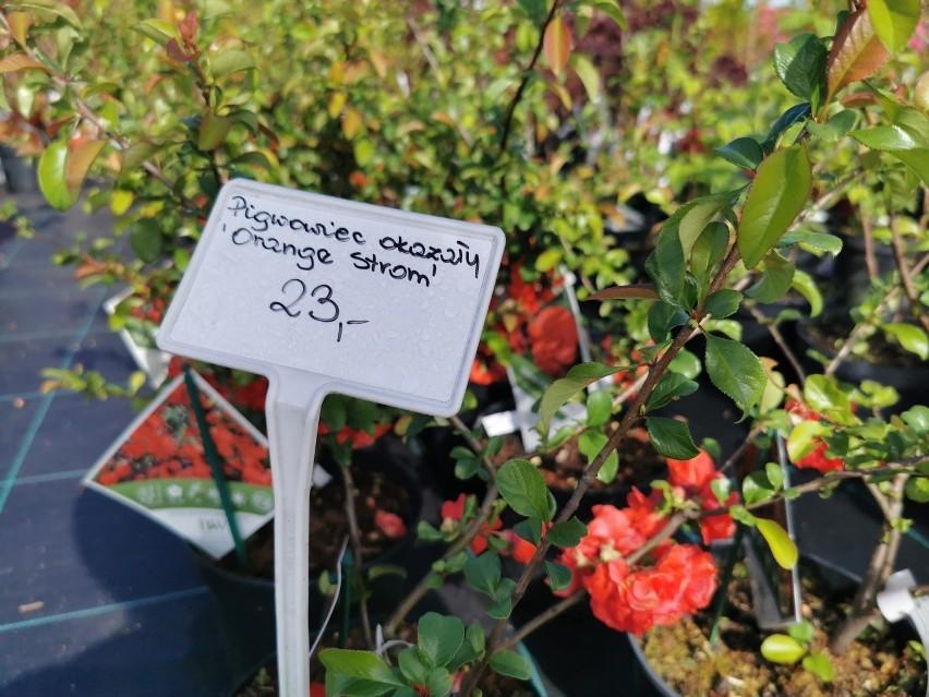 Szkółka roślin w Pisarzowicach