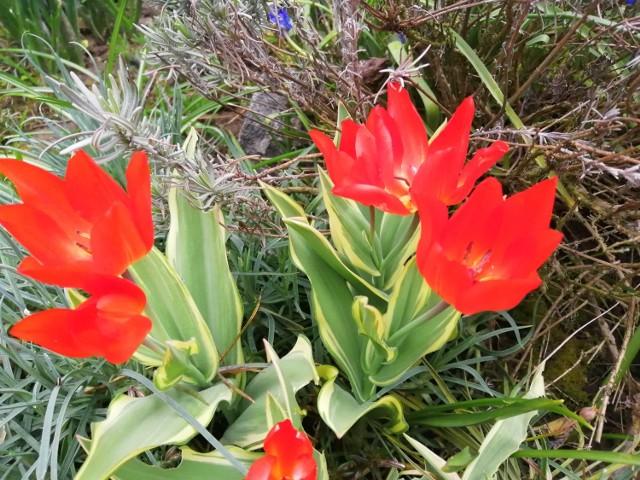 Pomimo brzydkiej pogody, różnokolorowe kwiatku zakwitły w ogrodzie.