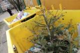 Co zrobić z choinką po świętach? Drzewko nie musi trafić do śmieci! Oto alternatywy