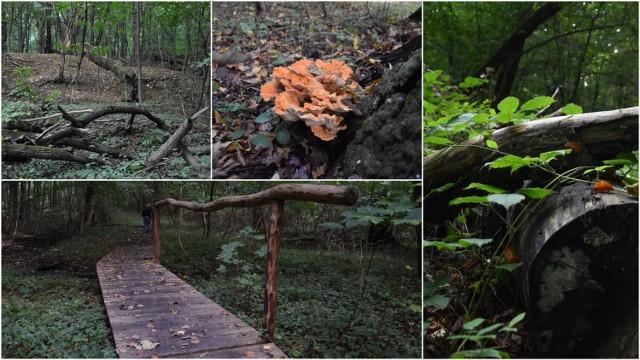 """Rezerwat """"Debrza"""" to magiczne miejsce w Tarnowie. Można tam pobyć z przyrodą i odetchnąć od miejskiego zgiełku"""