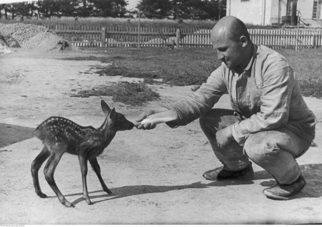 Więzienie ciężkie na Świętym Krzyżu, 1933-1935 Więzień karmiący sarenkę