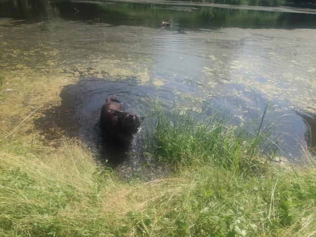 Nie ma to, jak kąpiel w upalny dzień. Kora była szczęśliwa.