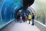 Łodzianie zwiedzali Orientarium! W weekend zoo w Łodzi obchodziło urodziny