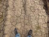Ustawa o przeciwdziałaniu skutkom suszy już jesienią. Co się zmieni?