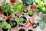 Te rośliny wg NASA pozwalają oczyścić mieszkanie ze smogu i toksyn