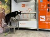 Gratka dla właścicieli czworonogów. Pod Warszawą otwarto samoobsługową myjnię dla psów