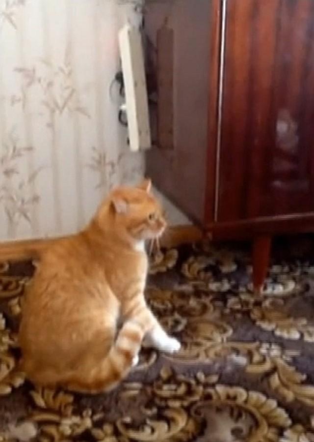 Ten kot jest bardzo mściwy