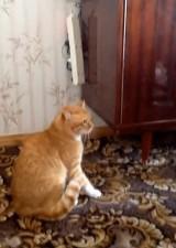 Zobacz, co robi ten kot! Takiego mściwego pupila jeszcze nie widzieliście [wideo]