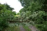 Żnin. Drzewo przewróciło się na ścieżkę. Urzędnicy mają sprawdzić czy inne drzewa zagrażają pieszym i rowerzystom [zdjęcia]