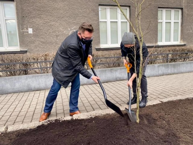 Tomasz Organek, lider formacji Organek, wraz z prezydentem Marcinem Krupą zasadzili drzewo w Katowicach. To tradycja przedkoncertowa zespołu.
