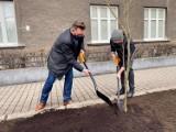 W Katowicach drzewo zasadził Tomasz Organek. Muzyk oddał hołd reżyserowi Kazimierzowi Kutzowi