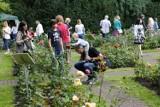 Festiwal róż - święto miłośników kwiatów w Ogrodzie Botanicznym UW [ZDJĘCIA]