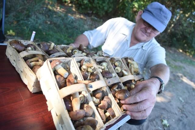 Zobaczcie, gdzie w województwie śląskim jest najwięcej grzybów. Sprawdźcie miejsca podane na kolejnych planszach.