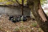 Wałbrzych: Skwer wstydu przy ulicy Prostej na Białym Kamieniu (ZDJĘCIA)