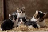 Urząd Miasta Jarosławia prowadzi zbiórkę karmy dla kotów. Przyłącz się do akcji!