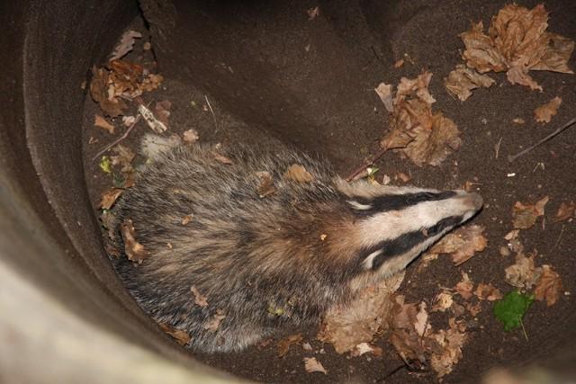 Na szczęście w studni nie było wody a zwierzę wpadając nie zrobiło sobie krzywdy