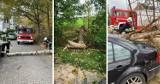 Wichura na Pomorzu! Wiele powalonych drzew. Strażacy interweniowali 550 razy