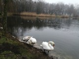 Leniwa grudniowa niedziela w Parku Śląskim. Zobaczcie ZDJĘCIA