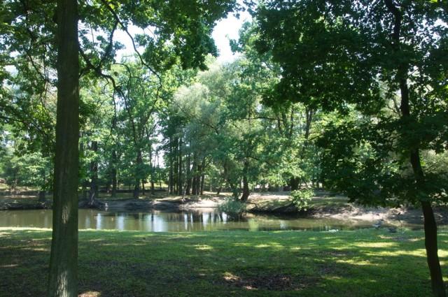Park Chopina to najpopularniejszy i największy park w Koninie. Zawsze przyciąga spacerowiczów, a wiosną, gdy wszystko budzi się do życia, potrafi zachwycić. Ze względu na mini-ZOO i plac zabaw jest uwielbiany przez dzieci.
