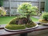 Drzewka bonsai, czyli świat w miniaturze. Niektóre mają nawet 800 lat! [ZDJĘCIA]