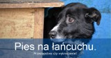 Pies na łańcuchu – przestępstwo, czy wykroczenie?