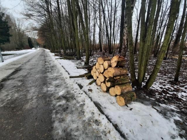 Wycinka w Dolinie Trzech Stawów w Katowicach