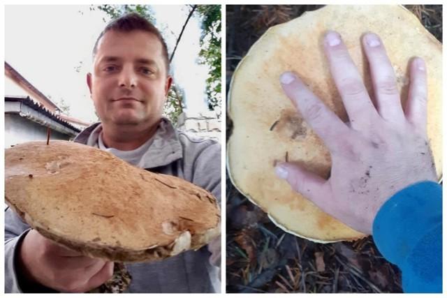 W Gorcach znalazł grzyba giganta. Tob blisko kilogramowy kozak