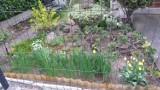 Chełmno przystraja się w kolory lata - coraz bardziej zielono, coraz więcej kwiatów [zdjęcia]
