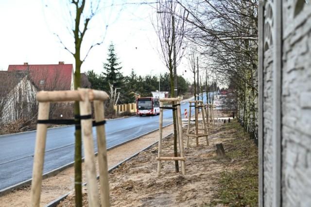 Miejski Zarząd Dróg i Transportu w Częstochowie zadbał o nowe nasadzenia na remontowanej ulicy św. Brata Alberta