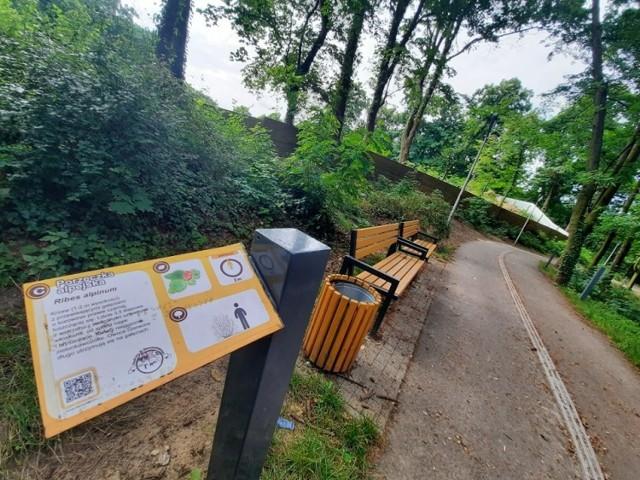 Park Siemiradzkiego w Gorzowie zaczął powstawać w 1869 r.