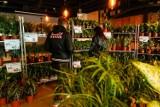 Wielka wyprzedaż roślin na Żoliborzu. Kilka tysięcy kwiatów za 50% ceny. Zielone wydarzenie wraca do Warszawy