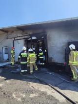Dwa pożary w gminie Budzyń: Paliła się chlewnia w Ostrówkach i las w Brzekińcu [ZDJĘCIA]