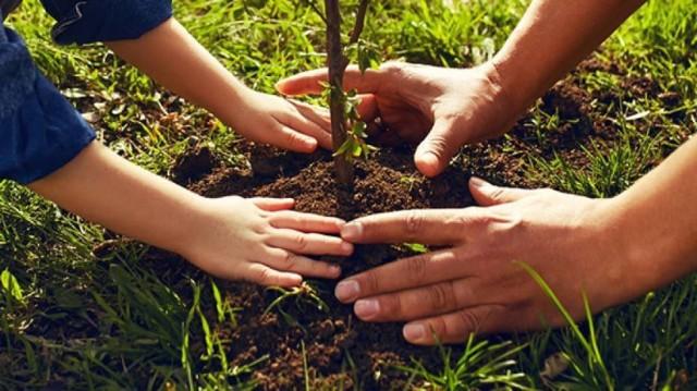Ogólnopolska Akcja SadziMy. Przyjdź dla nadleśnictwa po darmową sadzonkę drzew.