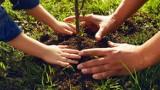 Odbierz darmowe drzewko z najbliższego nadleśnictwa! Ogólnopolska akcja SadziMY