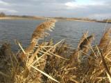 Chorzów: Miasto chce przejąć Żabie Doły i zbudować na nich molo