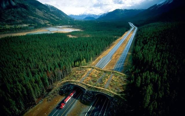 Te mosty ratują każdego dnia setki zwierząt. Piękne i pożyteczne konstrukcje